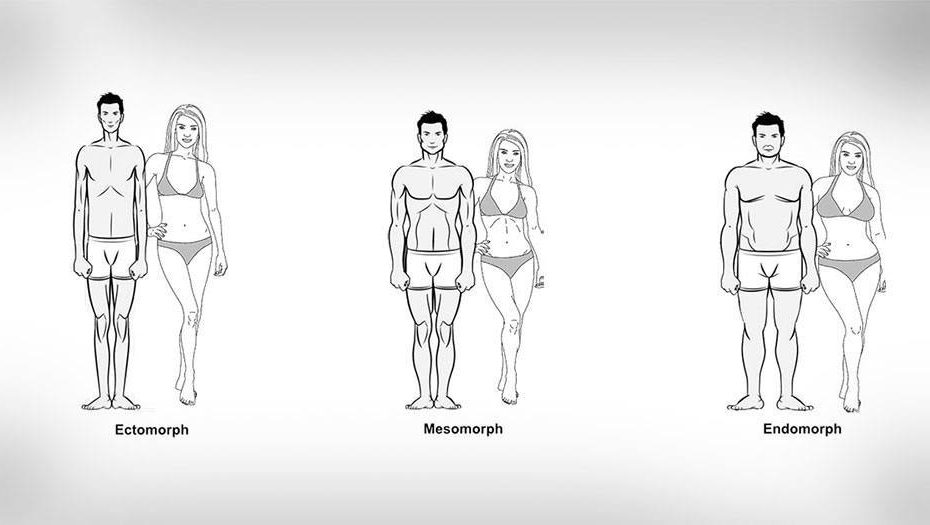What's Your Body Type Ectomorph Endomorph and Mesomorph BODYFIT