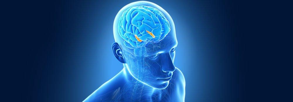 Brain Health Supplements BODYFIT
