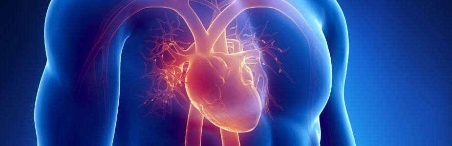 Cholesterol Control Supplements BODYFIT
